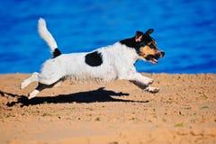 Active Dog Royalty Free Stock Photo