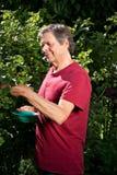 Active elderly man in garden collect berries Stock Image