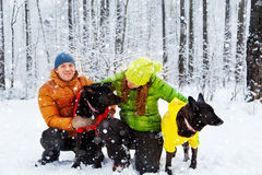 Active family walk the dog in the winter forest. Royalty Free Stock Images