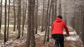 Active girl cycling with her dog. The woman in the winter wood goes between larches.