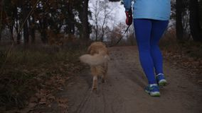 Active healthy girl running outdoors with her dog stock footage