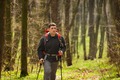 Active healthy man hiking in beautiful forest Royalty Free Stock Photography