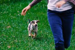 Active and healthy pet dog and person stock photos