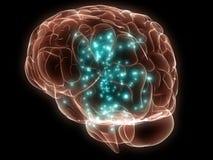 Active human brain Stock Image