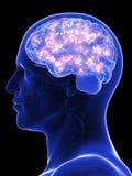 Active human brain stock illustration