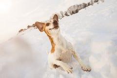 Active jouant le petit chien de chiot drôle de danse sautant Jeux neigeux d'hiver magique Images stock
