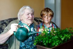 Active little preschool kid boy and grand grandmother watering parsley plants with water can at home. Little child helping grandparents to grow herbs. Happy Stock Photos