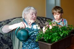 Active little preschool kid boy and grand grandmother watering parsley plants with water can at home. Little child helping grandparents to grow herbs. Happy Royalty Free Stock Image