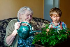 Active little preschool kid boy and grand grandmother watering parsley plants with water can at home. Little child helping grandparents to grow herbs. Happy Stock Photography