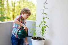 Active little preschool kid boy watering plants with water can at home on balcony. Little child helping arents to grow herbs and flowers. Happy preschool kid Stock Photo