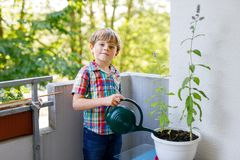 Active little preschool kid boy watering plants with water can at home on balcony. Little child helping arents to grow herbs and flowers. Happy preschool kid Royalty Free Stock Photos