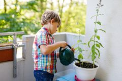 Active little preschool kid boy watering plants with water can at home on balcony stock photos