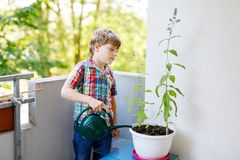 Active little preschool kid boy watering plants with water can at home on balcony. Little child helping arents to grow herbs and flowers. Happy preschool kid Stock Image