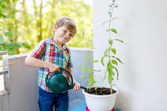 Active little preschool kid boy watering plants with water can at home on balcony. Little child helping arents to grow herbs and flowers. Happy preschool kid royalty free stock image