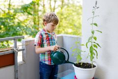 Active little preschool kid boy watering plants with water can at home on balcony stock images