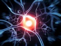 Active nerve cells. 3d rendered illustration - nerve cell Stock Photography