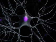 Active nerve cells Royalty Free Stock Photography