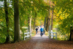 Active people riding bicycles in woods in autumn, Netherlands Stock Photos