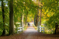 Active people walking in woods in autumn, Netherlands Royalty Free Stock Image