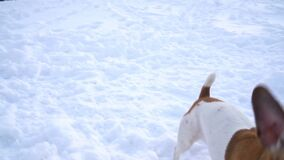 Active playing running dog with disk toy. Winter weather snowy white moments. DLSR camera slow motion video footage