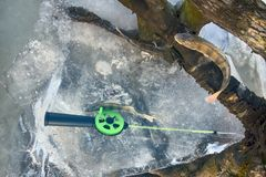 Active rest fishing for perch in winter from ice Royalty Free Stock Photo