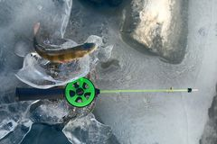 Active rest fishing for perch in winter from ice Royalty Free Stock Images