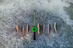 active rest fishing for perch in winter from ice Royalty Free Stock Photos