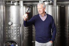 Active retired winemaker Royalty Free Stock Photo