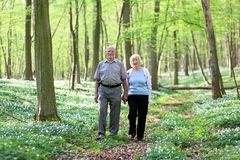 Active senior couple hiking in the forest royalty free stock photography