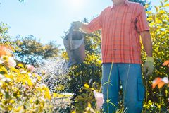 Active senior man watering plants in the garden in a tranquil summer day. Active senior man with a healthy lifestyle smiling while watering plants in the garden Stock Image