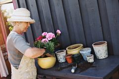 Active senior woman planting new plants in terracotta pots Stock Photos