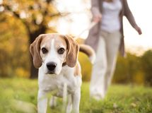 Active senior woman Stock Photography