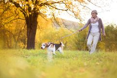 Active senior woman. Walks dog in nature stock photography
