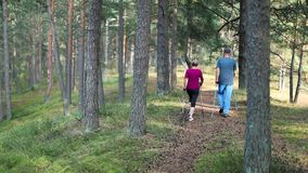 Active seniors doing nordic walking in the woods. Active seniors doing nordic walking in the pine tree woods stock video