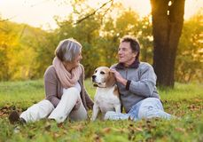 Active seniors. Walking dog in nature Stock Photos