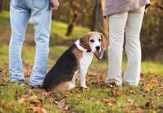 Active Seniors. Walking dog in nature royalty free stock photos