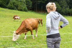 Active sporty female hiker observing and caressing pasturing cows on meadow. Royalty Free Stock Image