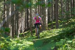 Active sporty woman riding mountain bike on forest trail . Royalty Free Stock Images