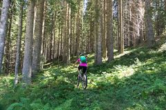 Active sporty woman riding mountain bike on forest trail . Stock Images