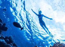 Active woman diving. In the sea and enjoying wild nature, swimming underwater and consider different fishes, extreme sport, luxury summer vacation concept stock photography
