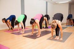 Active young adults during yoga class Stock Photos