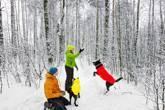 Activefamily walk the dog in the winter forest. Stock Images