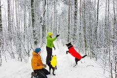 Activefamily-Weg der Hund im Winterwald Stockbilder