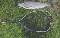 Actividad al aire libre de las truchas de la pesca Fotos de archivo libres de regalías