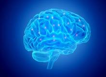 Actividad cerebral humana stock de ilustración