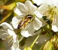 Actividad de la primavera Imagen de archivo libre de regalías