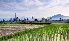 Actividad del granjero en el campo del arroz Fotos de archivo