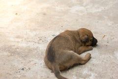 Actividad del pequeño perrito imágenes de archivo libres de regalías