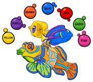 Actividad educativa de los colores básicos para los niños Imágenes de archivo libres de regalías