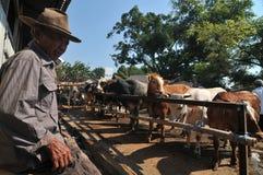 Actividad en el mercado tradicional de la vaca durante la preparación de Eid al-Adha en Indonesia Foto de archivo